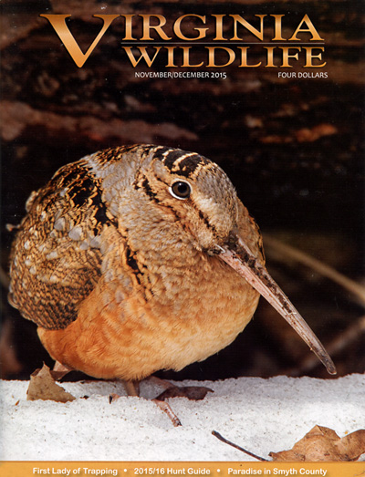 Subscribe to Virginia Wildlife