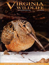 Best Price for Virginia Wildlife Magazine Subscription