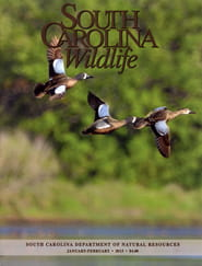South Carolina Wildlife1