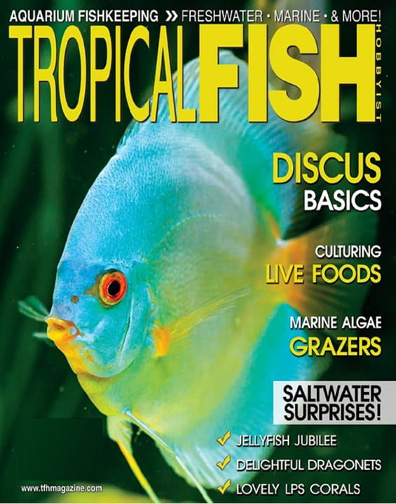 tropical fish hobbyist magazine tropical fish hobbyist