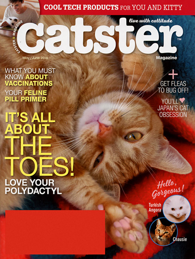 Subscribe to Catster