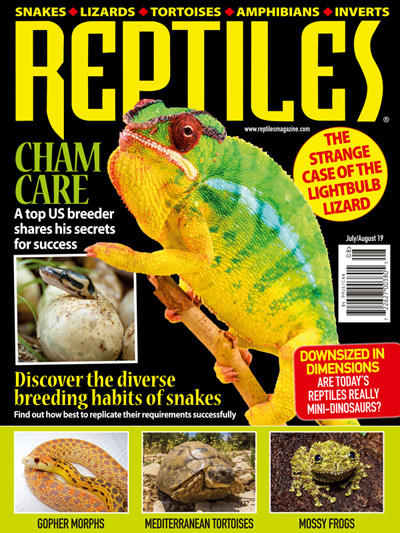 Subscribe to Reptiles