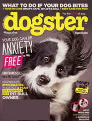 Dogster2