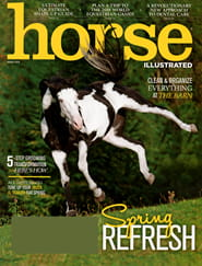 Horse Illustrated0